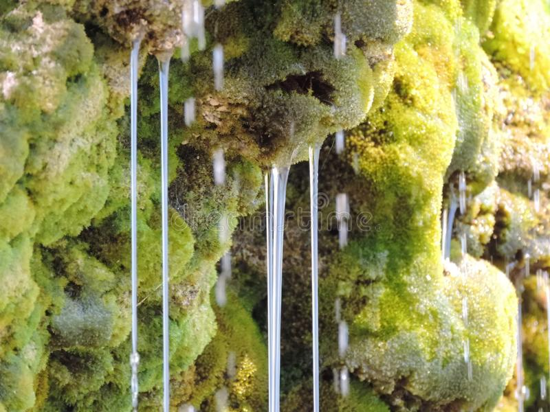 Moss with mountain water. stock images