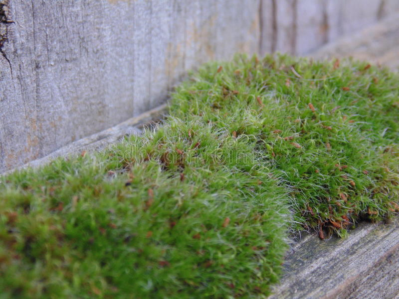 Moss; Natures muscles stock images