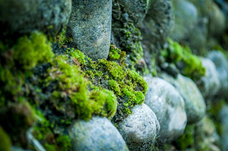 Moss on Norfolk Flint Wall stock photos