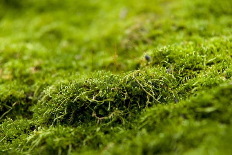 Moss på stenen arkivfoto