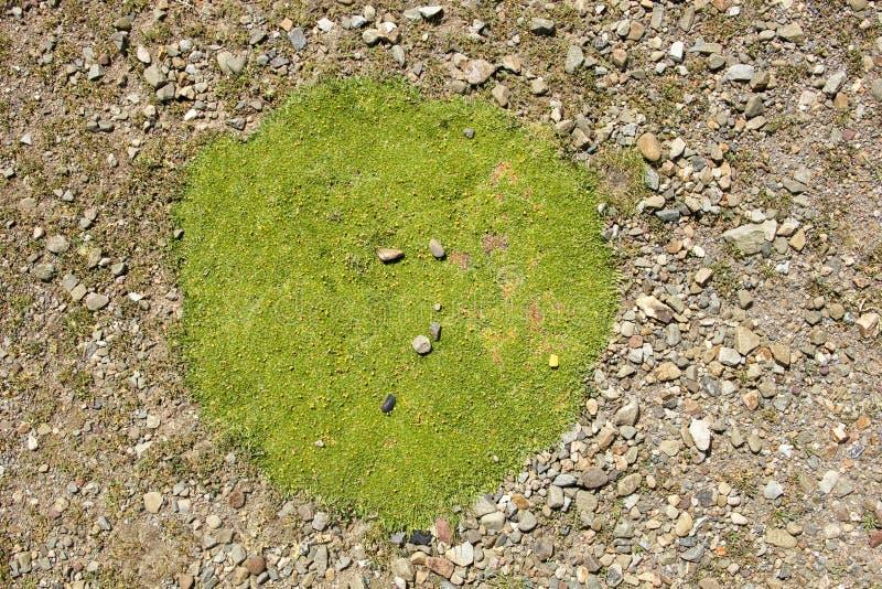 Moss Patch verde fotografia stock libera da diritti