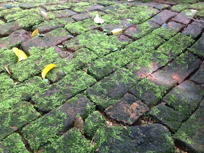 Moss Path royalty-vrije stock foto's
