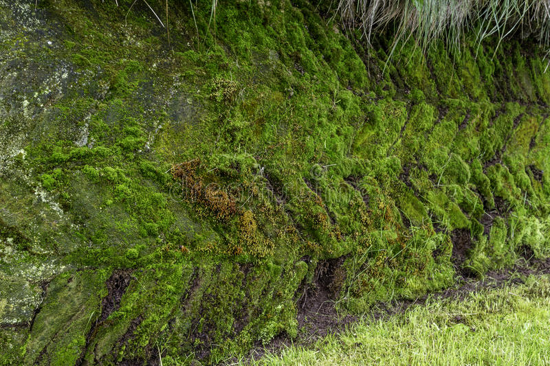 Moss Pattern stock images