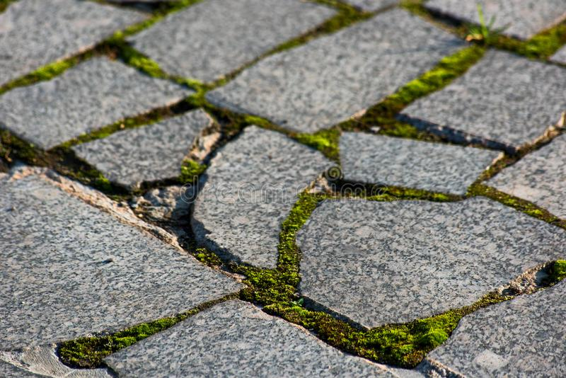 Moss in a paving stone. Is macro stock image