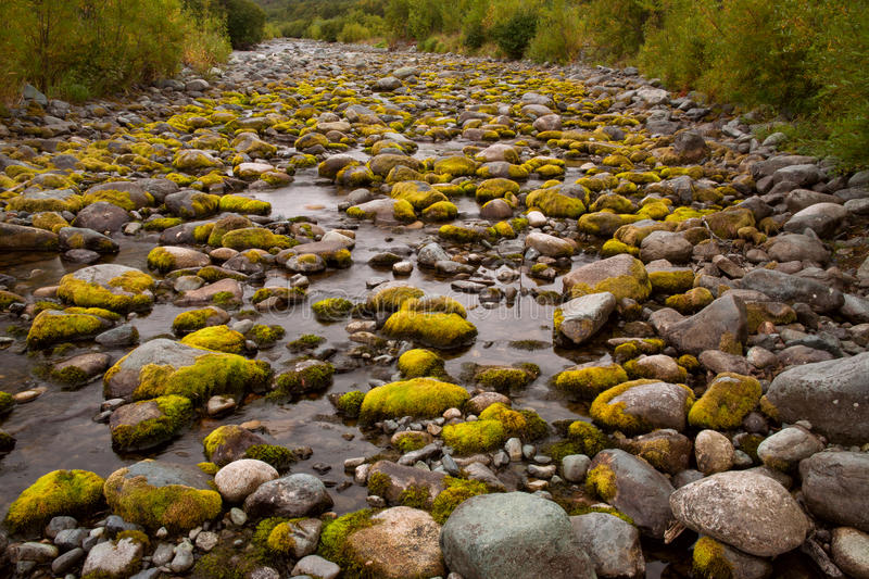 Moss on river stones in the dry riverbed. royalty free stock images