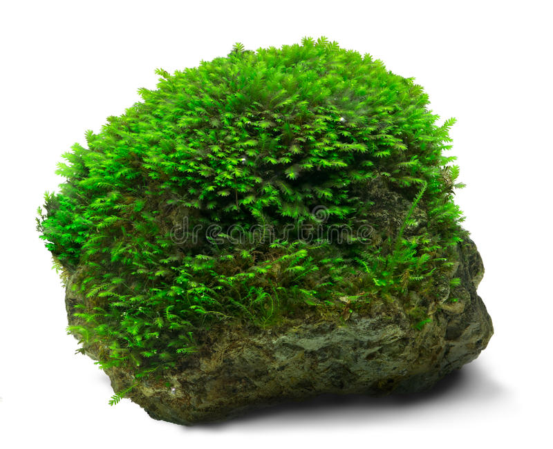 Moss and rock stock images