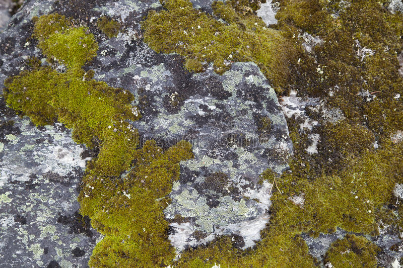 Moss on Rock Background Texture. Moss and Fungus on Surface of Rock royalty free stock image