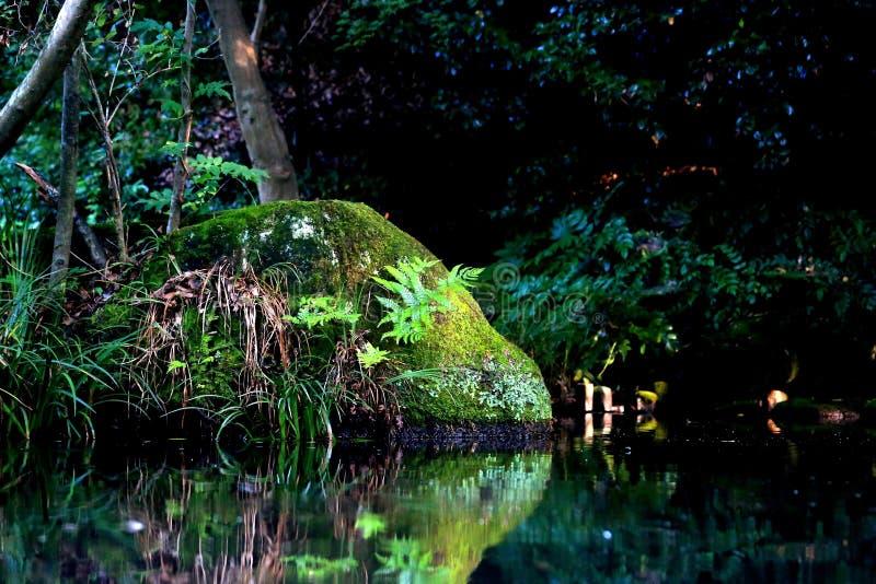 Moss Rock em uma lagoa imagens de stock royalty free
