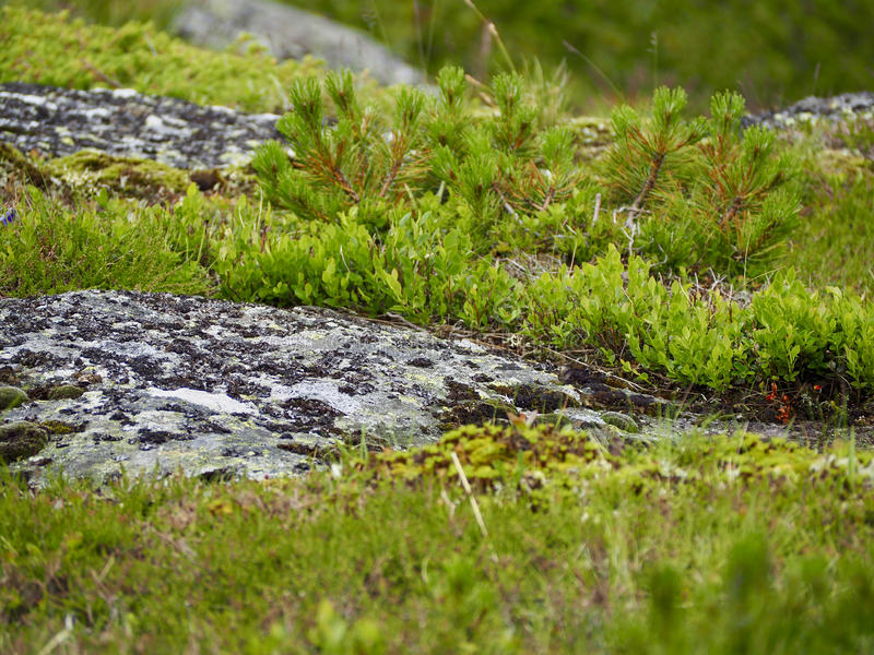 Moss on the rock stock images