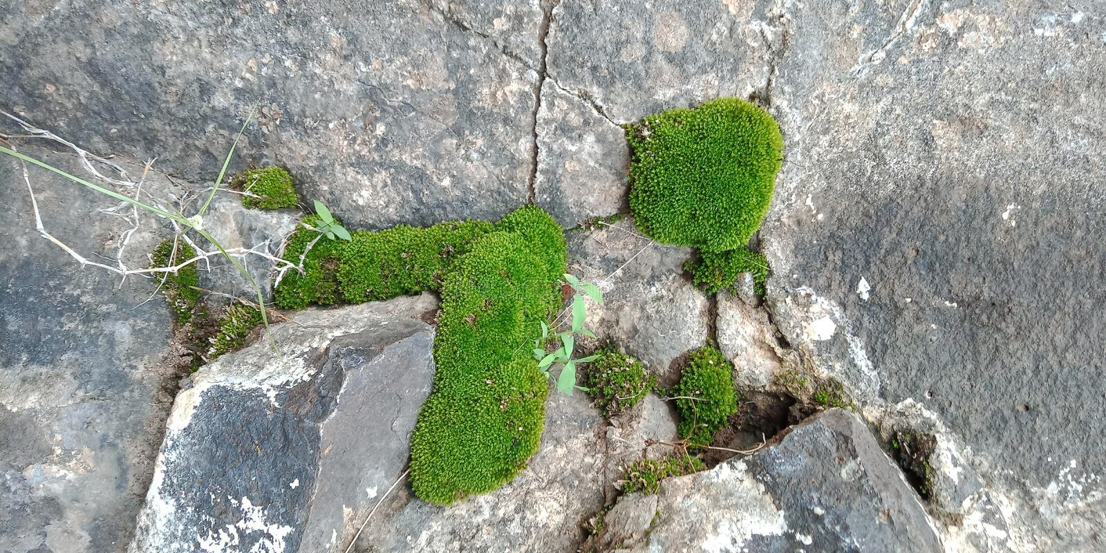 Moss on the rock textured background wallpaper, royalty free stock photos