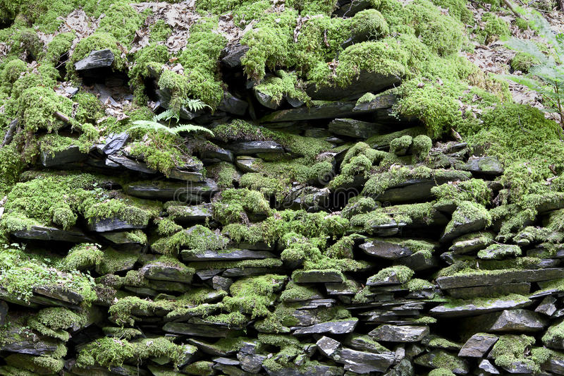 Moss rock wall background. Rustic old moss covered rock wall background stock images