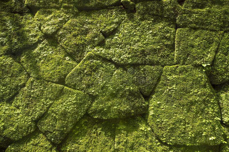 Moss on Rock Wall in Old Temple. Bali, Indonesia. stock image