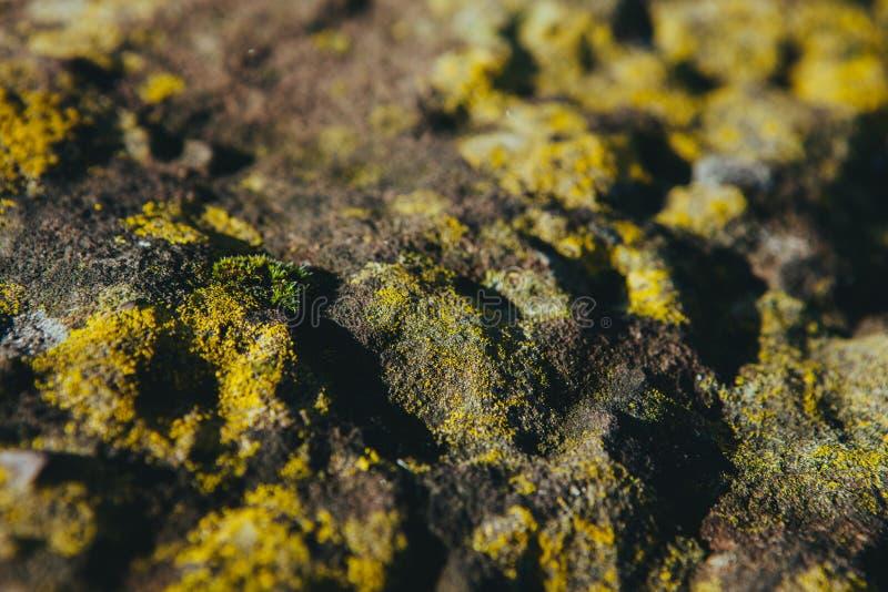 Moss On Rocks Free Public Domain Cc0 Image