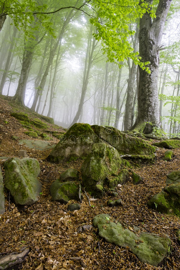 Moss, rocks and dry leaves stock photos