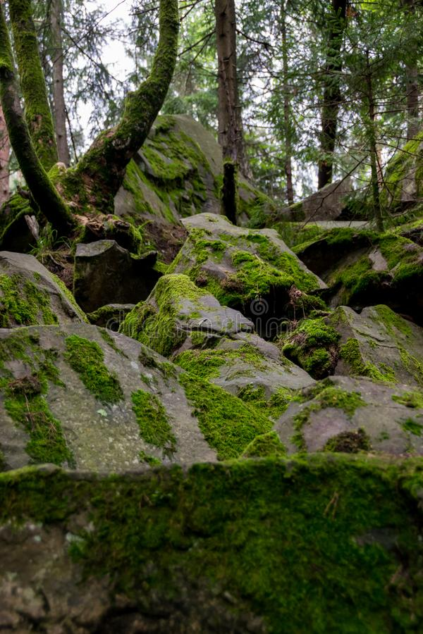 Moss covered rocks in the forest. Moss on the rocks in the forest. Dovbush rocks climbing area in Yaremche, Ukraine royalty free stock photos