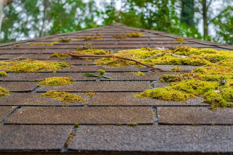 Moss on the roof royalty free stock photo