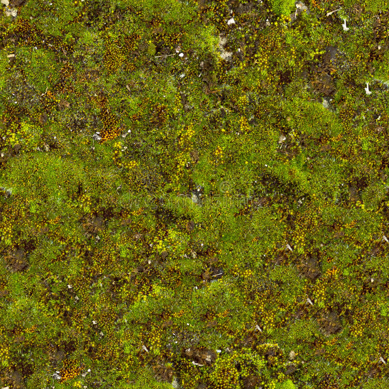 Free Moss Seamless Texture. Royalty Free Stock Photography - 29780037