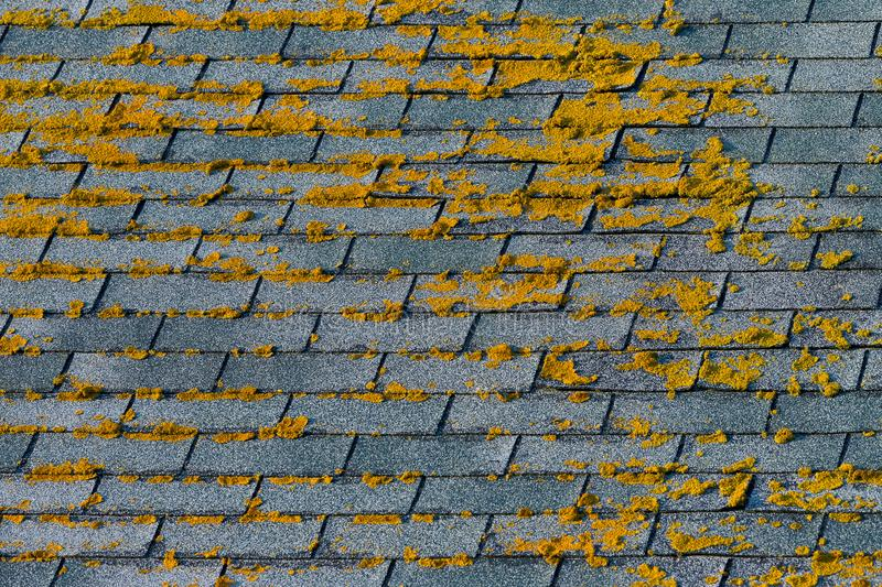 Moss on shingles royalty free stock images