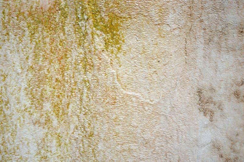moss skały kamienia konsystencja unikalna teren tekstura geofizyczny Powulkaniczne skały zdjęcia royalty free