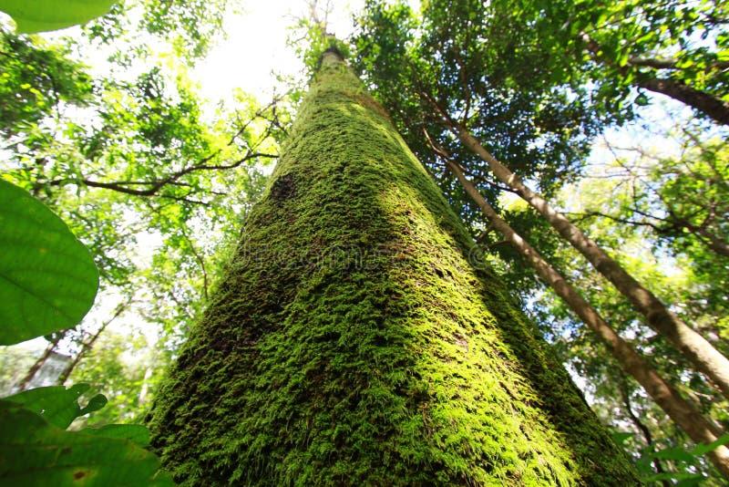 Moss royaltyfria foton