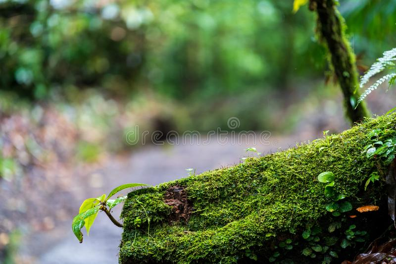 Moss and small plants growing on a fallen log in the rainforests around Arneal, Alajuela, Costa Rica. Green, lush, nature, parks, arenal, central, america royalty free stock photos