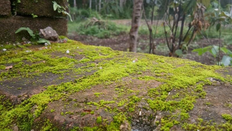 Moss Stone stockfotos