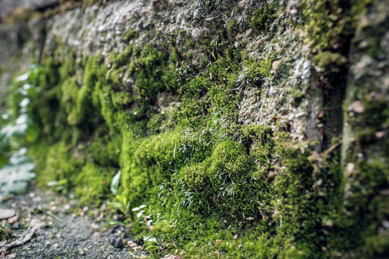 Moss on the Stone stock images
