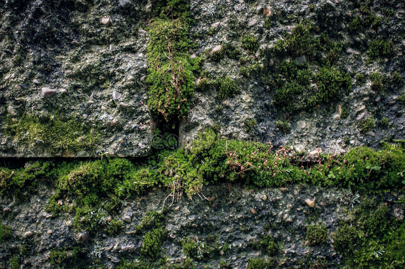 Moss in Stone stock photography