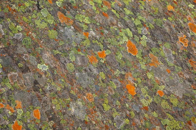 Moss on stone, colorful natural backgroung, Svartisen, Norway stock images