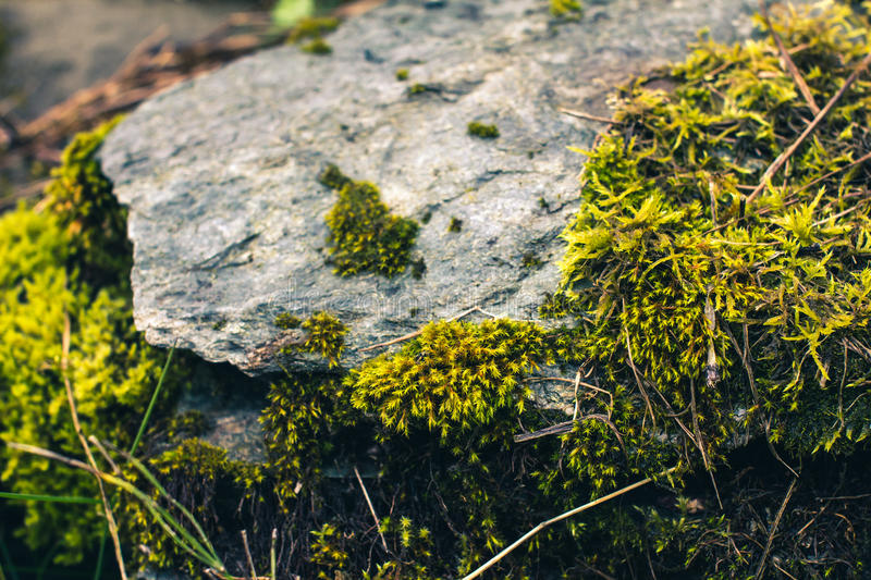 Moss on a stone royalty free stock images