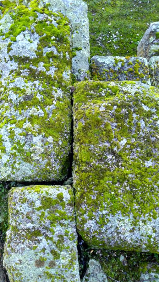 Moss in stone wall castle. Close Up Moss in stone wall old castle stock images