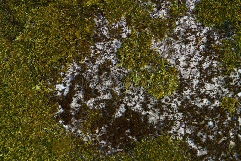 Moss on the stone wall. Green beautyfull moss on the stone wall stock photo