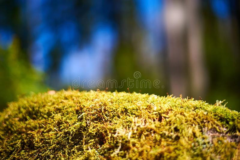 Moss summer nature detail background, czech republic, europe royalty free stock images