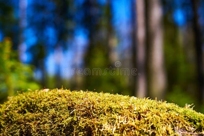 Moss summer nature detail background, czech republic, europe stock photos
