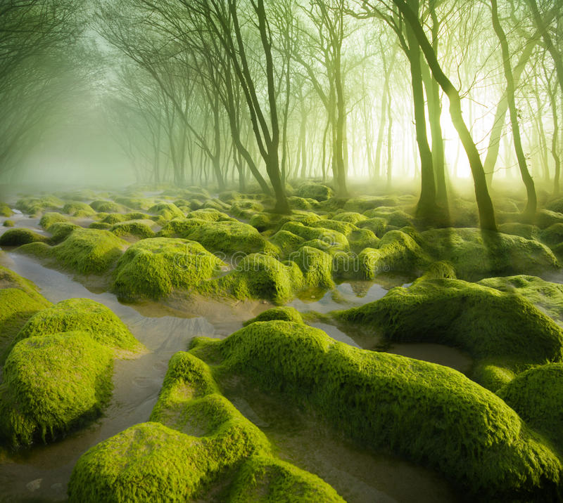 Moss Swamp images stock