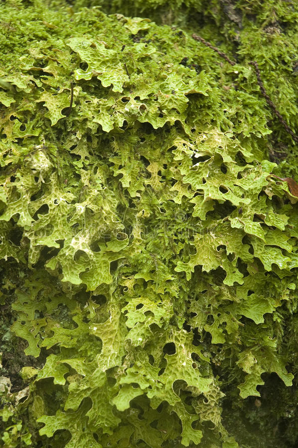Download Moss texture stock photo. Image of haircap, foliage, nature - 14140398
