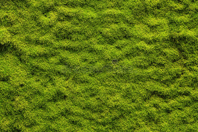 Moss texture. Background with copy space