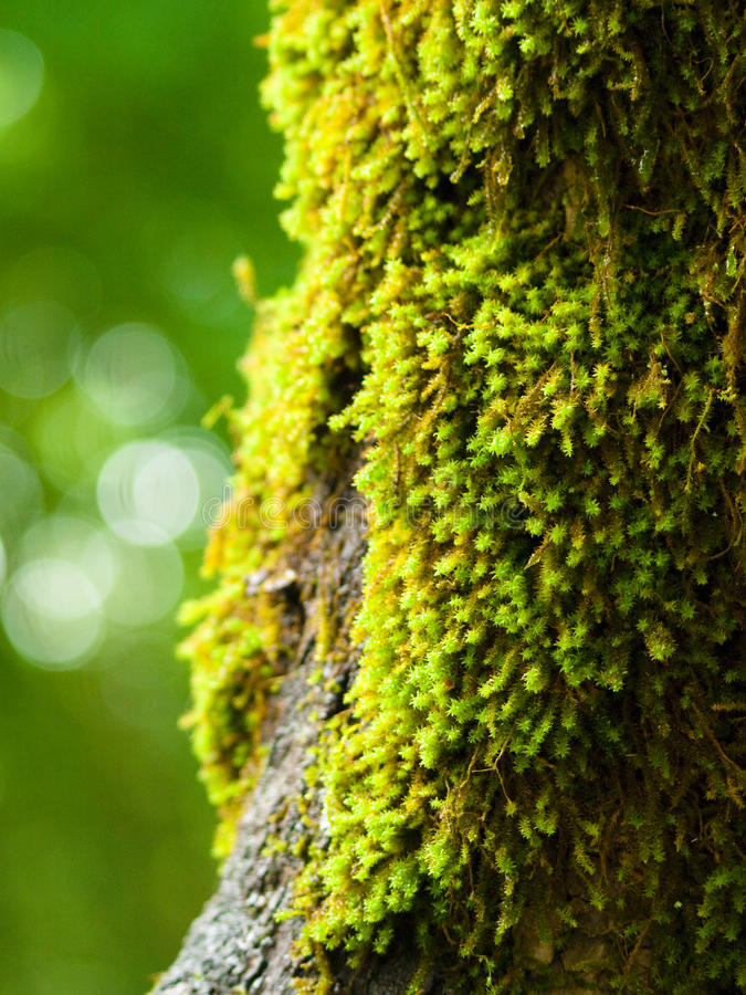 Moss on a three stock images