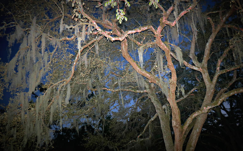 Moss Tree al crepuscolo immagine stock libera da diritti