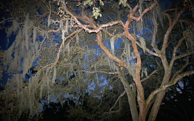 Moss Tree en la oscuridad imagen de archivo libre de regalías