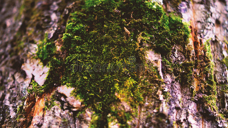 Moss on the tree royalty free stock image