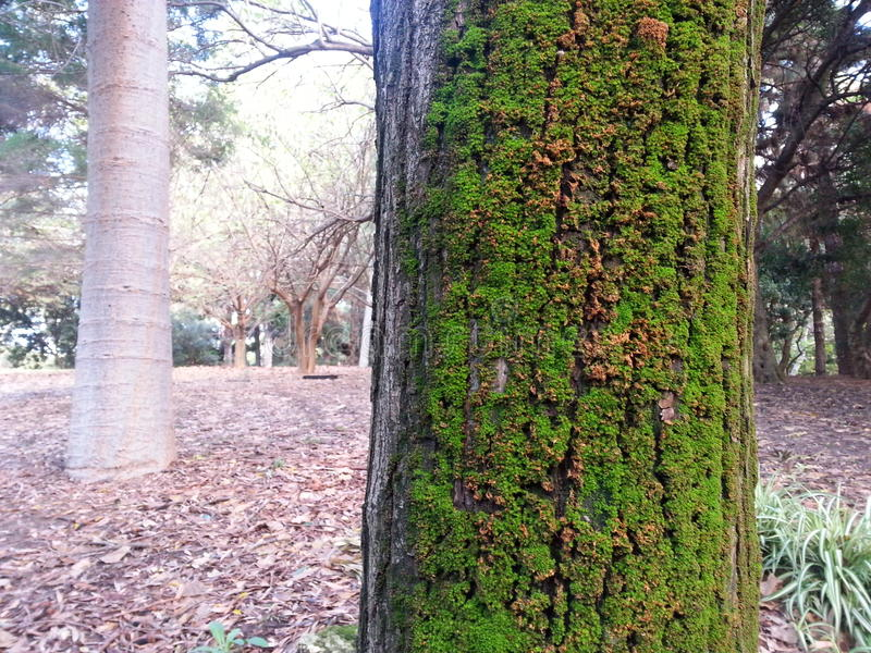 Green moss on side of a tree in a park royalty free stock photo