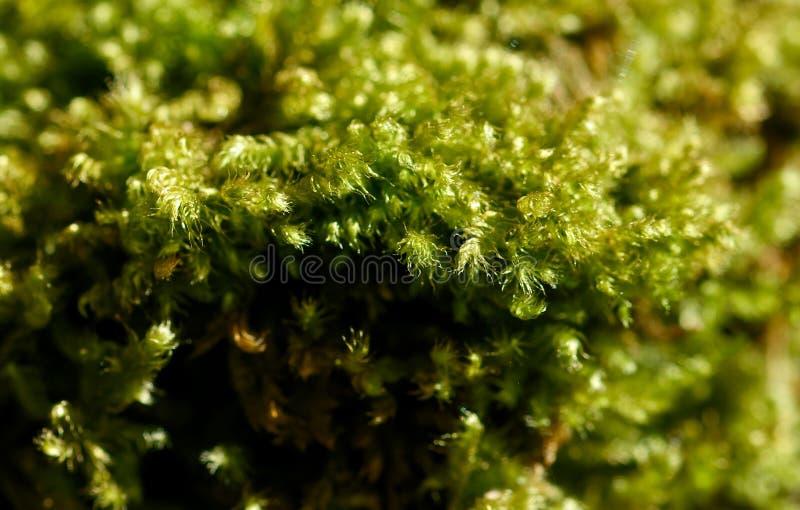 Moss on tree. In a meadow in la spezia royalty free stock photo