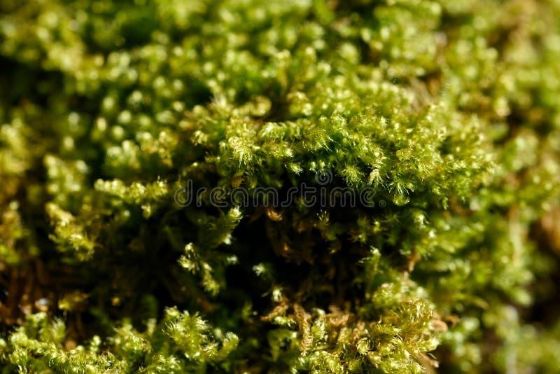 Moss on tree. In a meadow in la spezia stock photography