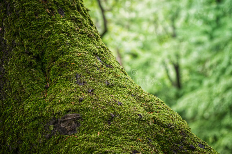 Moss on a tree trunk royalty free stock images