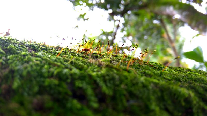 moss on trees stock photography