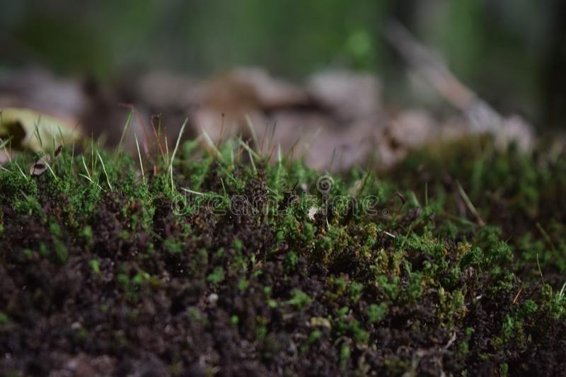 Moss in the tress. Flora plant moss tress nature stock photography