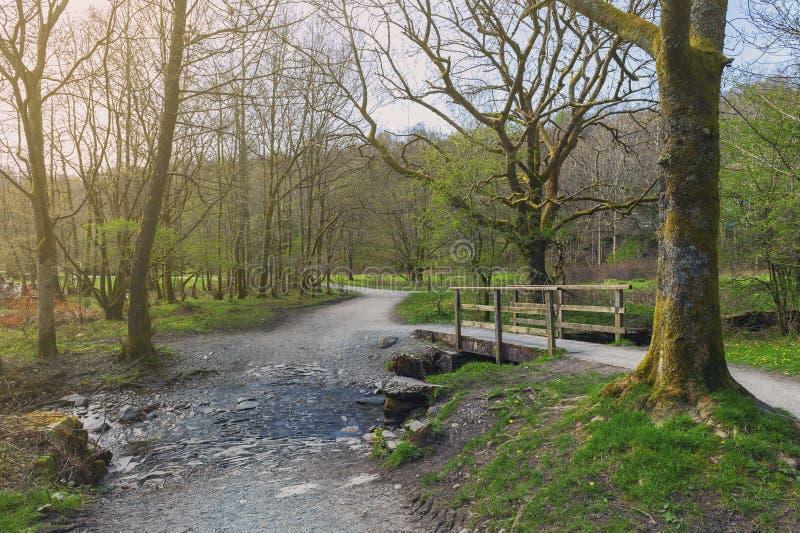 Moss Walks branco, área recreacional da floresta cênico pelo rio Rothay em Ambleside, parque nacional do distrito do lago em Lake imagens de stock royalty free