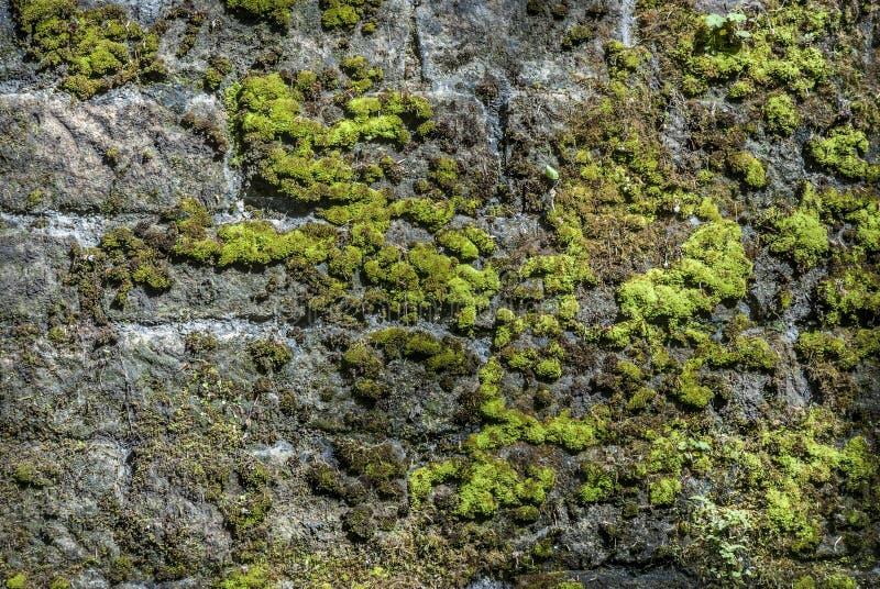 Moss Wall immagine stock