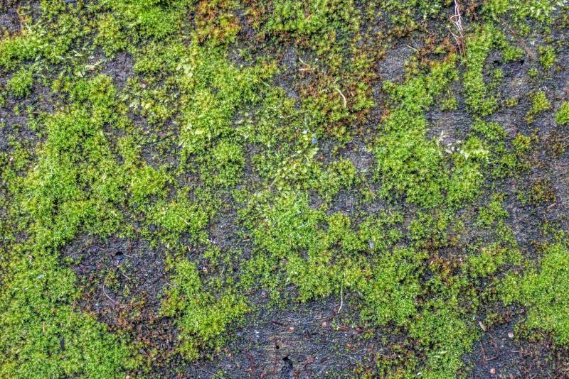 Moss On Wall. A closeup shot of green moss on a cement wall stock photos